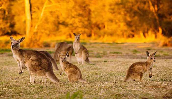 Австралия. Круизы от Антарес Тур.